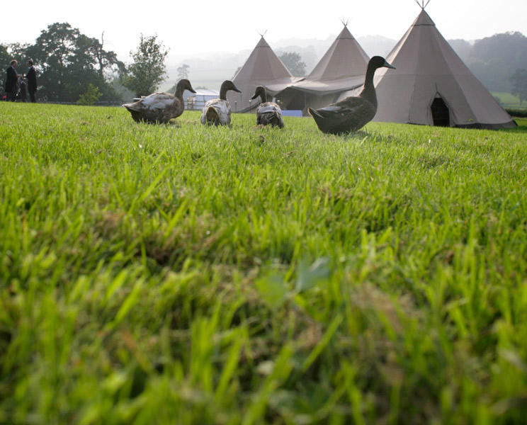ducks, eco-friendly wedding, green wedding, tipi, marquee hire